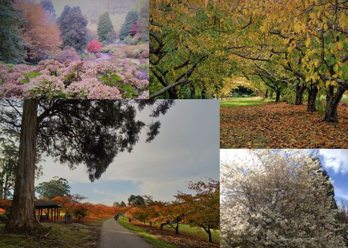VaporFi Australia -  Best Parks in Melbourne: Fitzroy Gardens