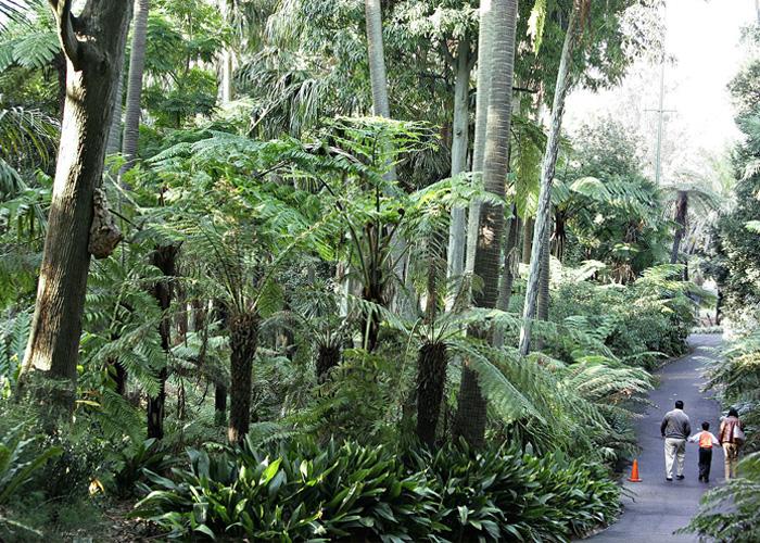 VaporFi Australia -  Best Parks in Melbourne: Melbourne Royal Botanical Gardens